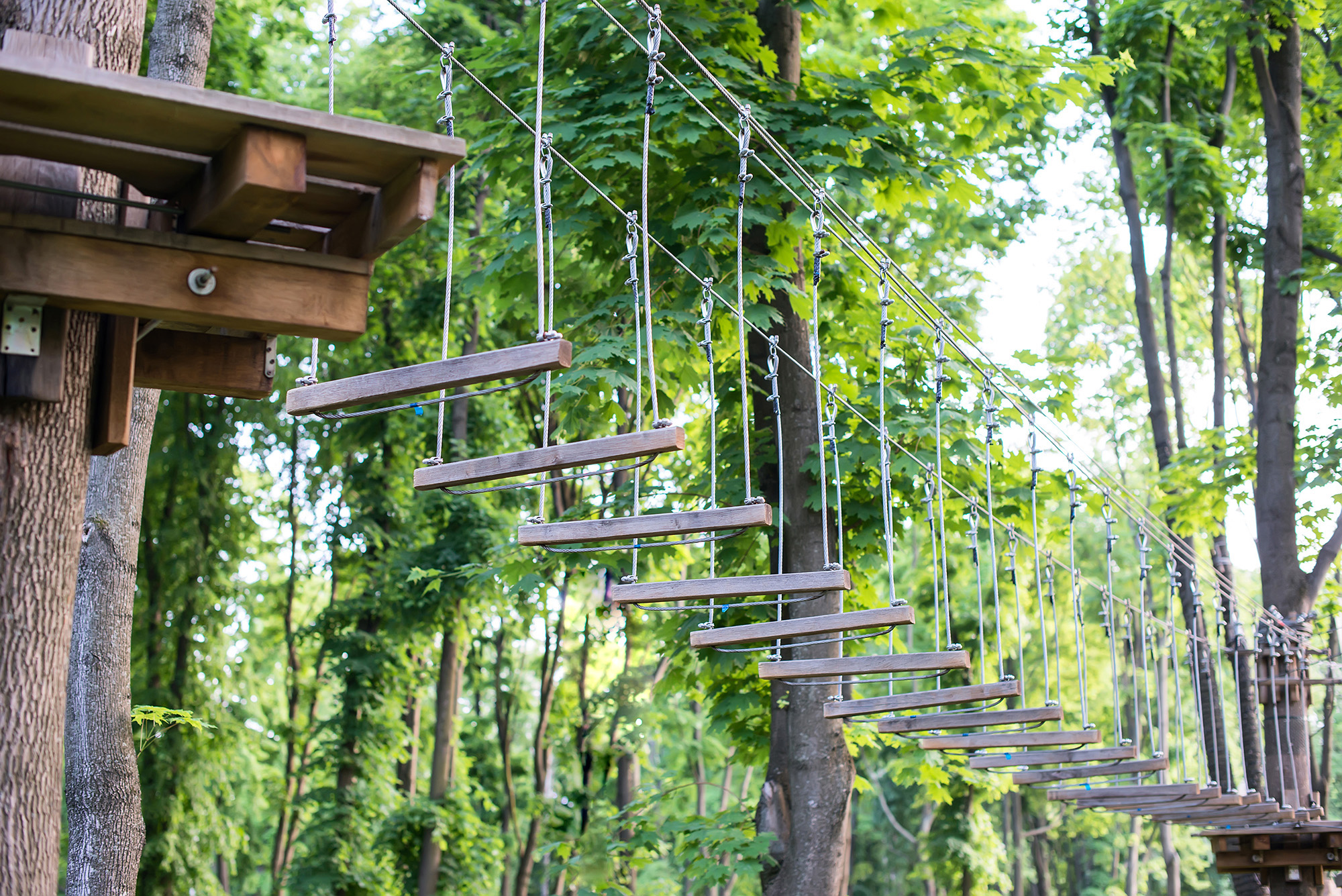 image of a wooden ropes course with a green canopy behind it